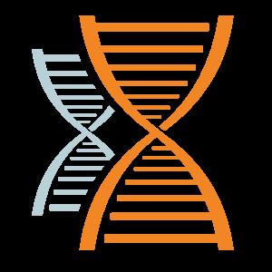 Grafica di catene di DNA